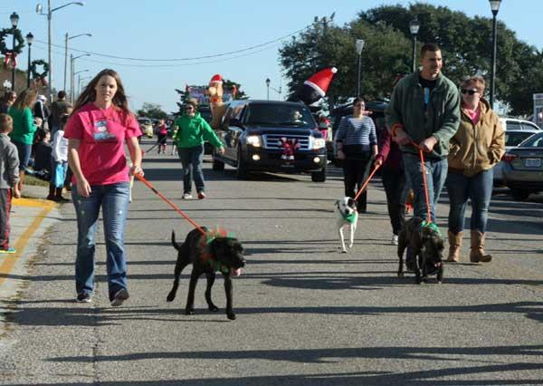 carteret county animal adoption