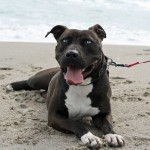 Disney at the beach - Carteret County Humane Society and Animal Shelter