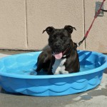 Disney in pool - Carteret County Humane Society and Animal Shelter